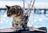 Animali domestici a bordo